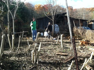 Jon and Seneca moving buckets of dirt among our felled trees of heaven.