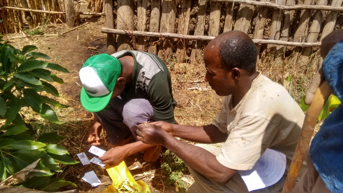 Tagging trees for data collection.