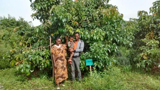 G&M beside their avocado trees, with intercrops of lavender to increase pollination and lemongrass to deter insect pests.